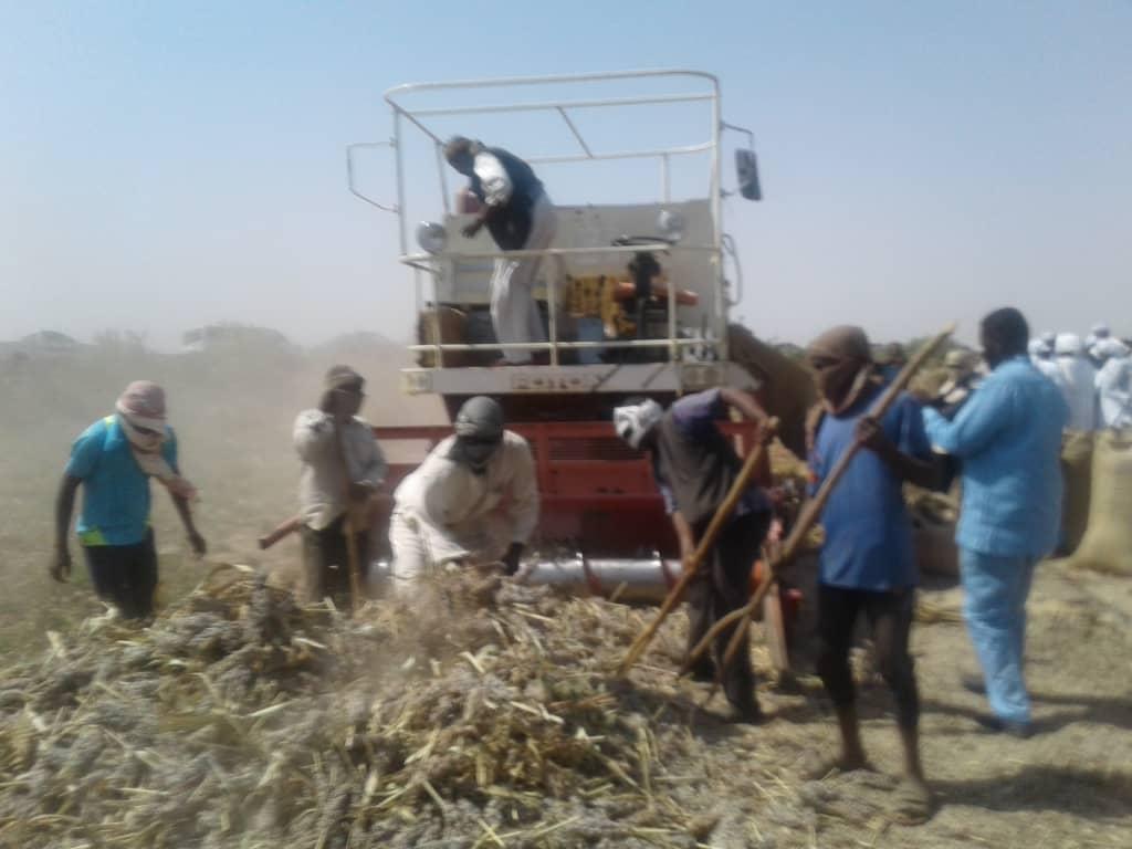 السودان :وكيل الري ..مستعدون لري (800)الف فدان من القمح بمشروع الجزيرة
