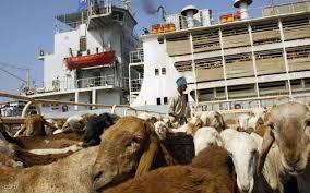السعودية تفرض حظرا على استيراد المواشي السودانية