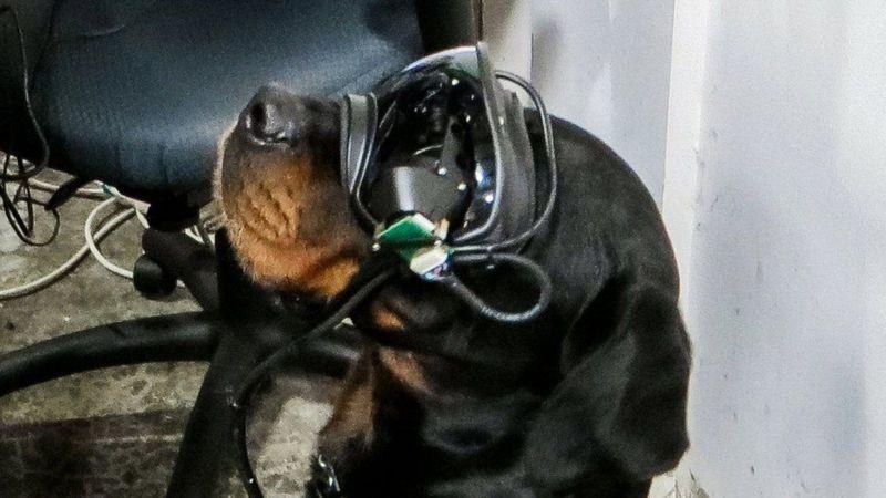 نظارات ذكية للكلاب