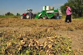 انطلاق حملة حصاد فول الصويا في مشروع الجزيرة