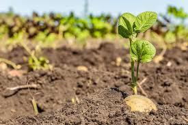 تخصيص (٥٠) الف فدان للتغذية المدرسية بمشروع خور أبوحبل الزراعي
